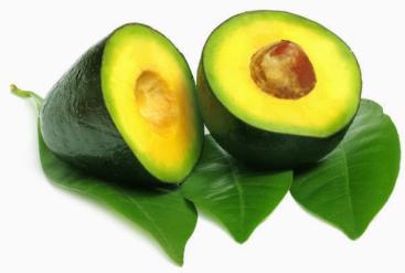 manfaat daun buah alpukat
